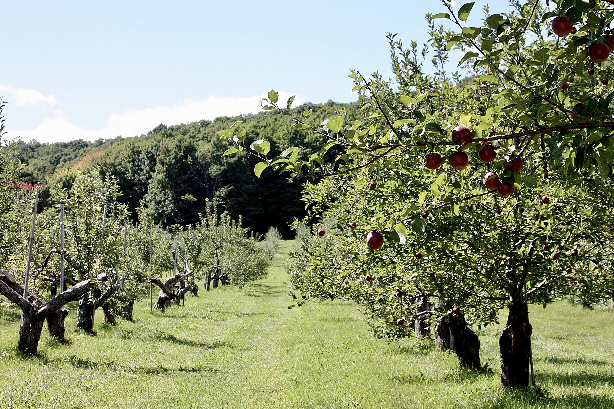 tarte pommes hollandaise